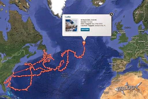 lydia shark tracker