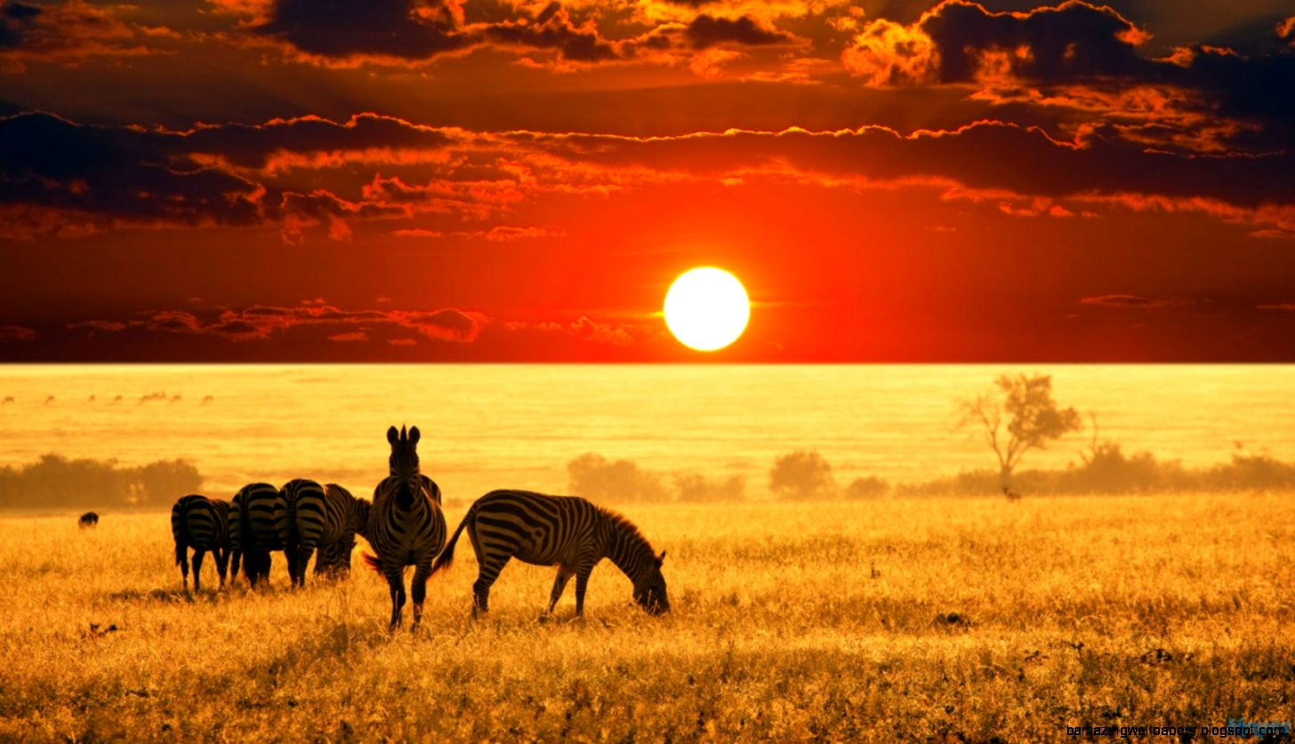 » Africa Fun Facts and Statistics