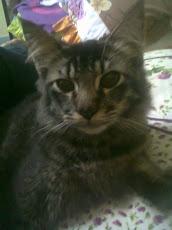 Kim Bum kucing kami~