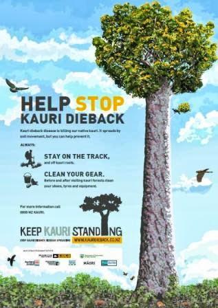Keep Kauri Standing