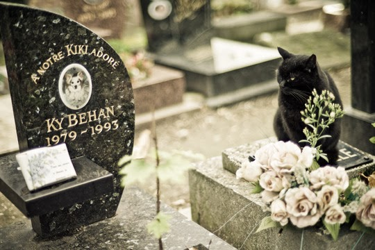 cat in a dog cemetery