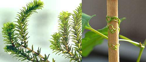 Pengertian dan Macam Gerak pada Tumbuhan