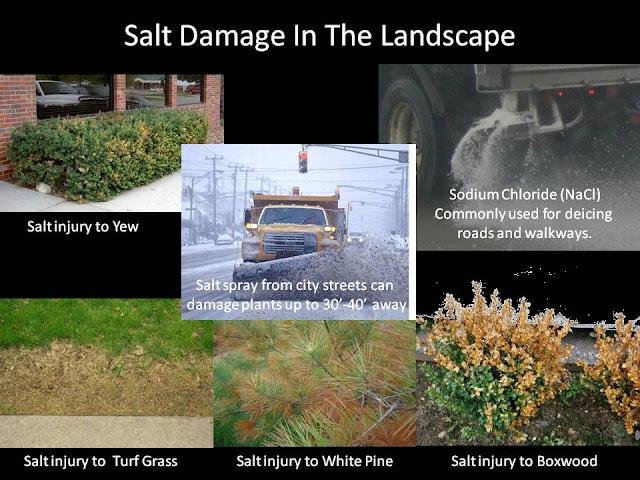White swan homes and gardens winter garden care for Winter garden maintenance