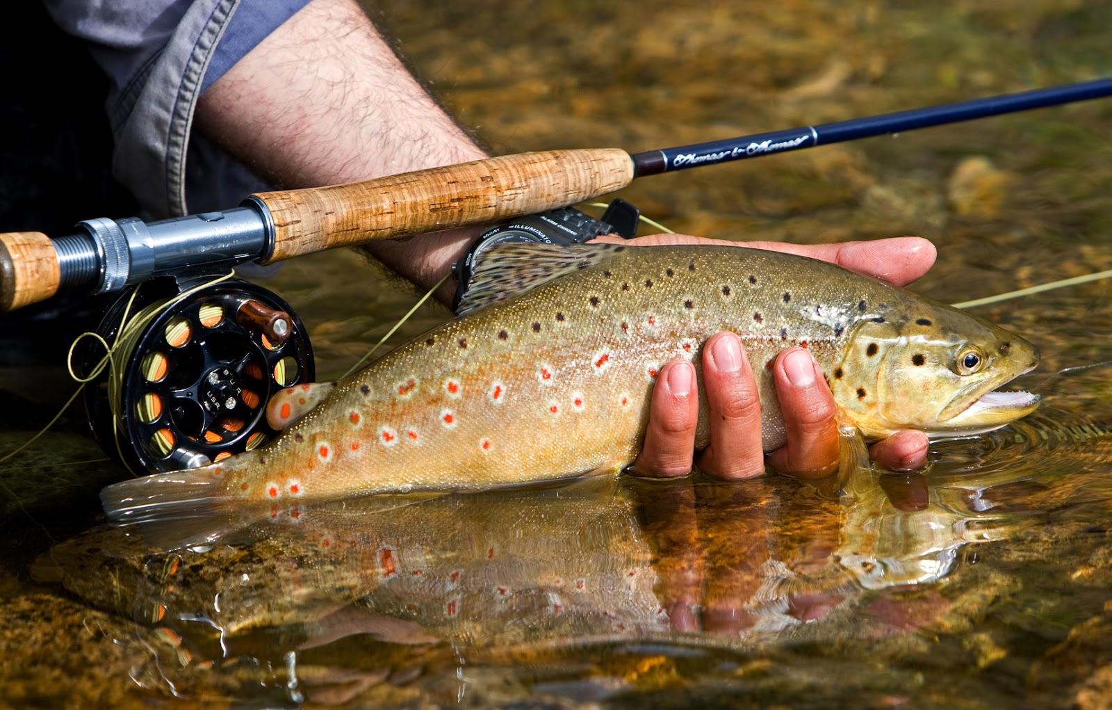 idaho fly fishers | idaho montana fishing | fly fishing trips, Fly Fishing Bait