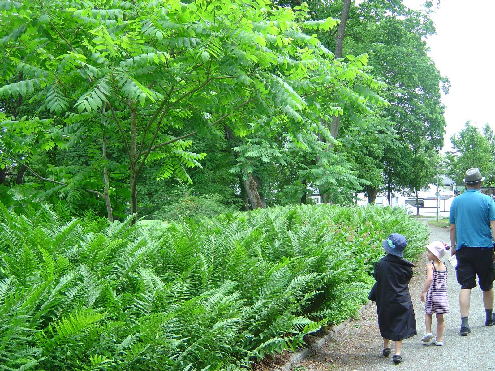 Gröna rum   livslust och energi!: juni 2011