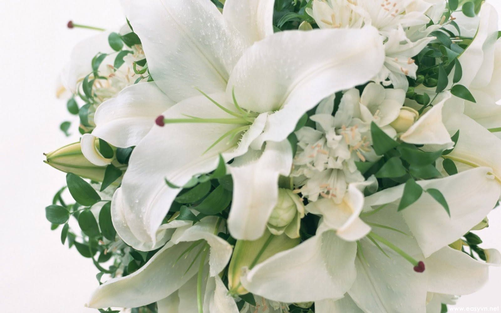 Download Free Beautiful White Flower Wallpapers Most Beautiful