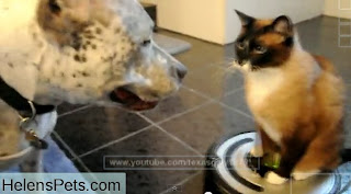 funny animals cat and dog