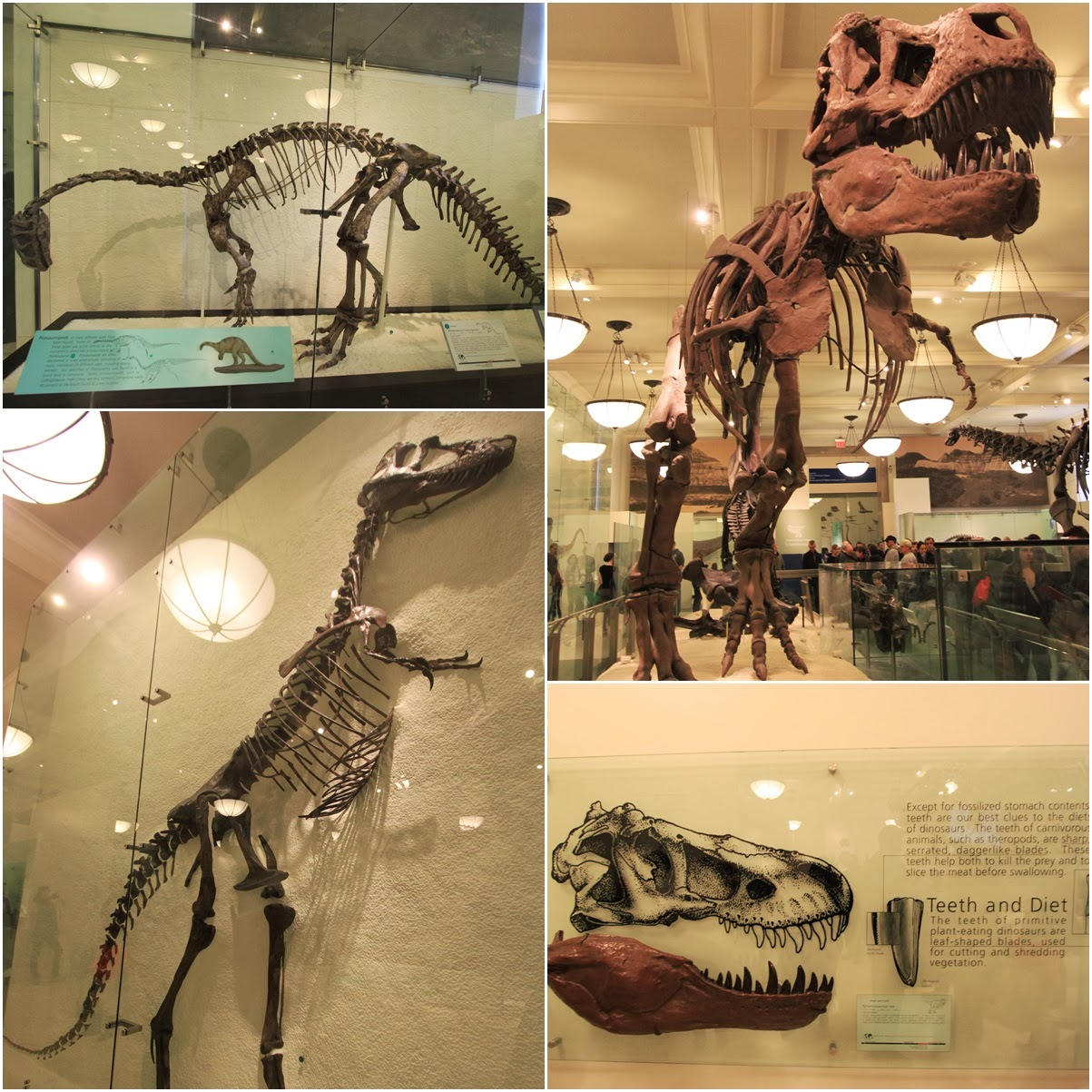 American Museum Natural History In New York CIty USA Lense Moments - Best history museums in usa