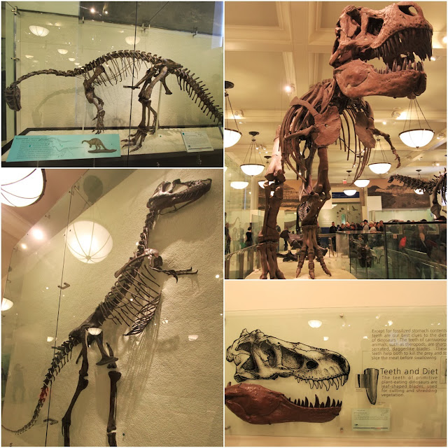 The Hall of Dinosaurs features fossils at American Museum of Natural History in New York City, USA