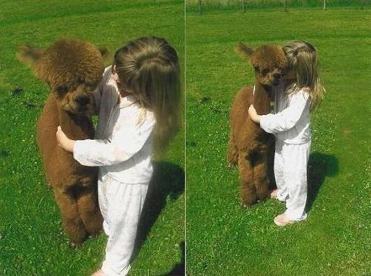 Funny Baby Alpaca