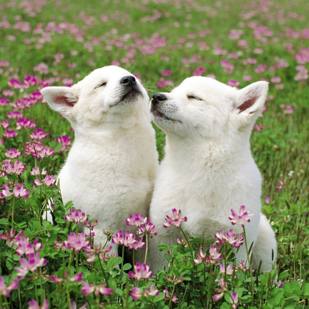 Cute white puppies in photos funny and cute animals for Pictures of cute dogs