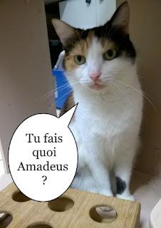 Belle chatte isabelle.