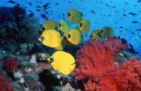 Réserve naturelles Maritimes