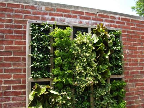Rent to Ownph Blog Inspiring Vertical Gardens for Small