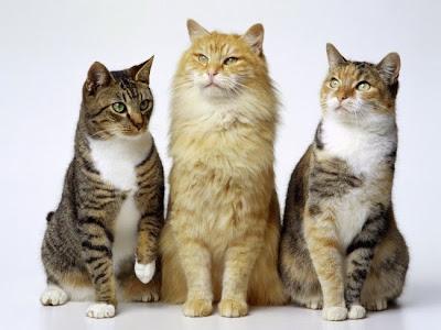 сколько кошек надо иметь дома