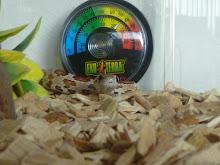 beltazar my snake