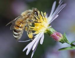 Lebah - www.jurukunci.net