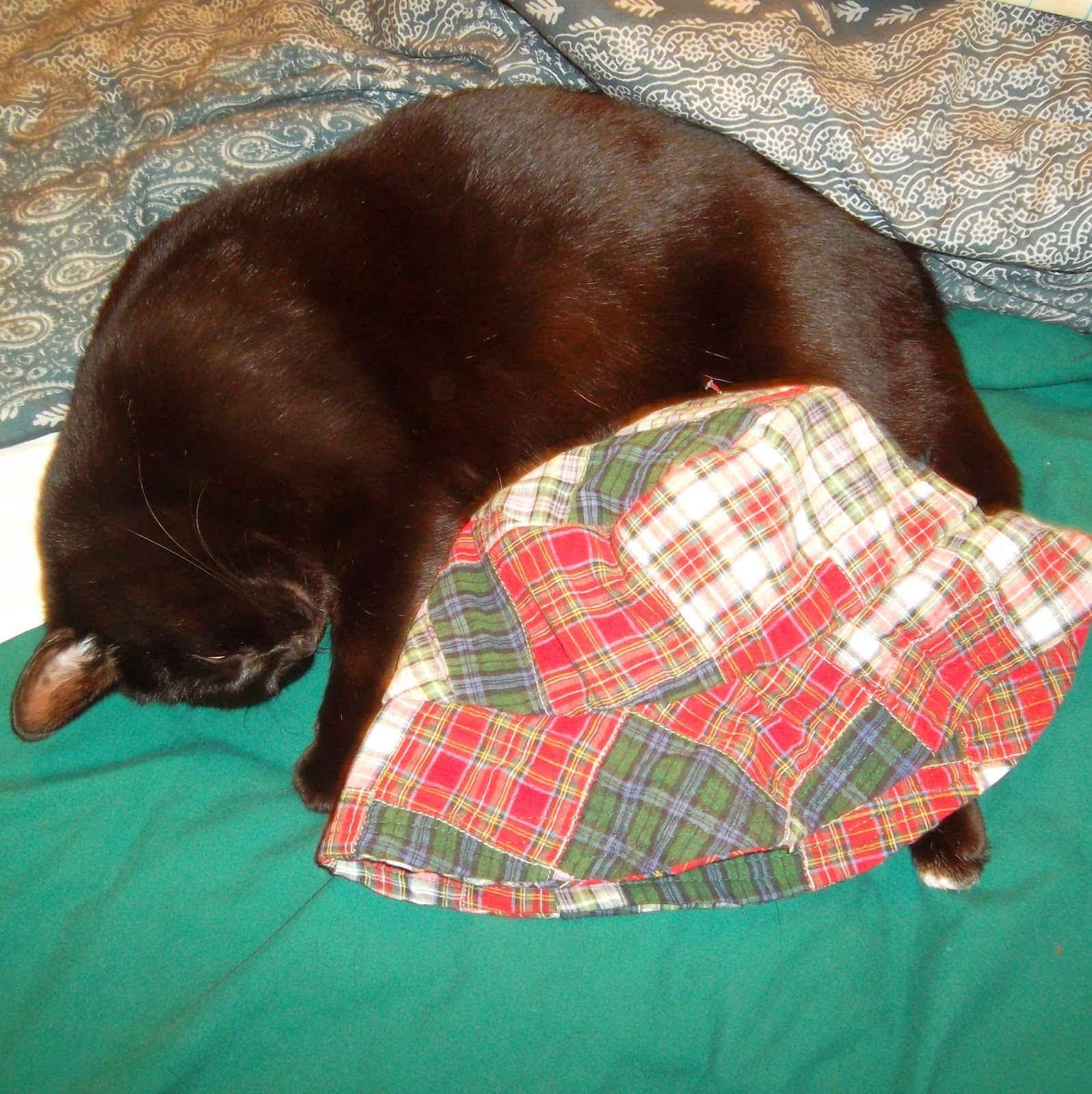 My black cat Starfire curls on her side, forming a half-circle around a hat sewn from piecework squares in four plaid designs: dark red, blue and green, red on white and blue and green on white.