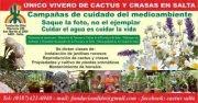 Cactus-salta Fundacion Dido