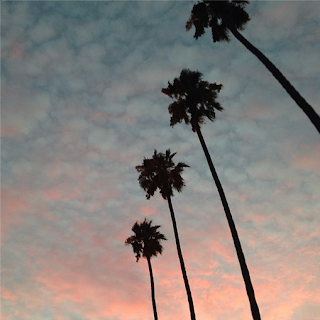 Palm trees, print, california