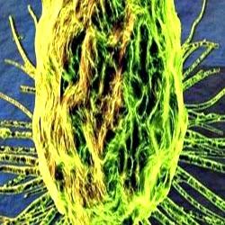 Câncer e a pesquisa de tratamento por campos elétricos