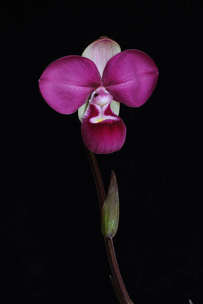 Orchid Fever: A Horticultural Tale of Love, Lust, and Lunacy Eric Hansen
