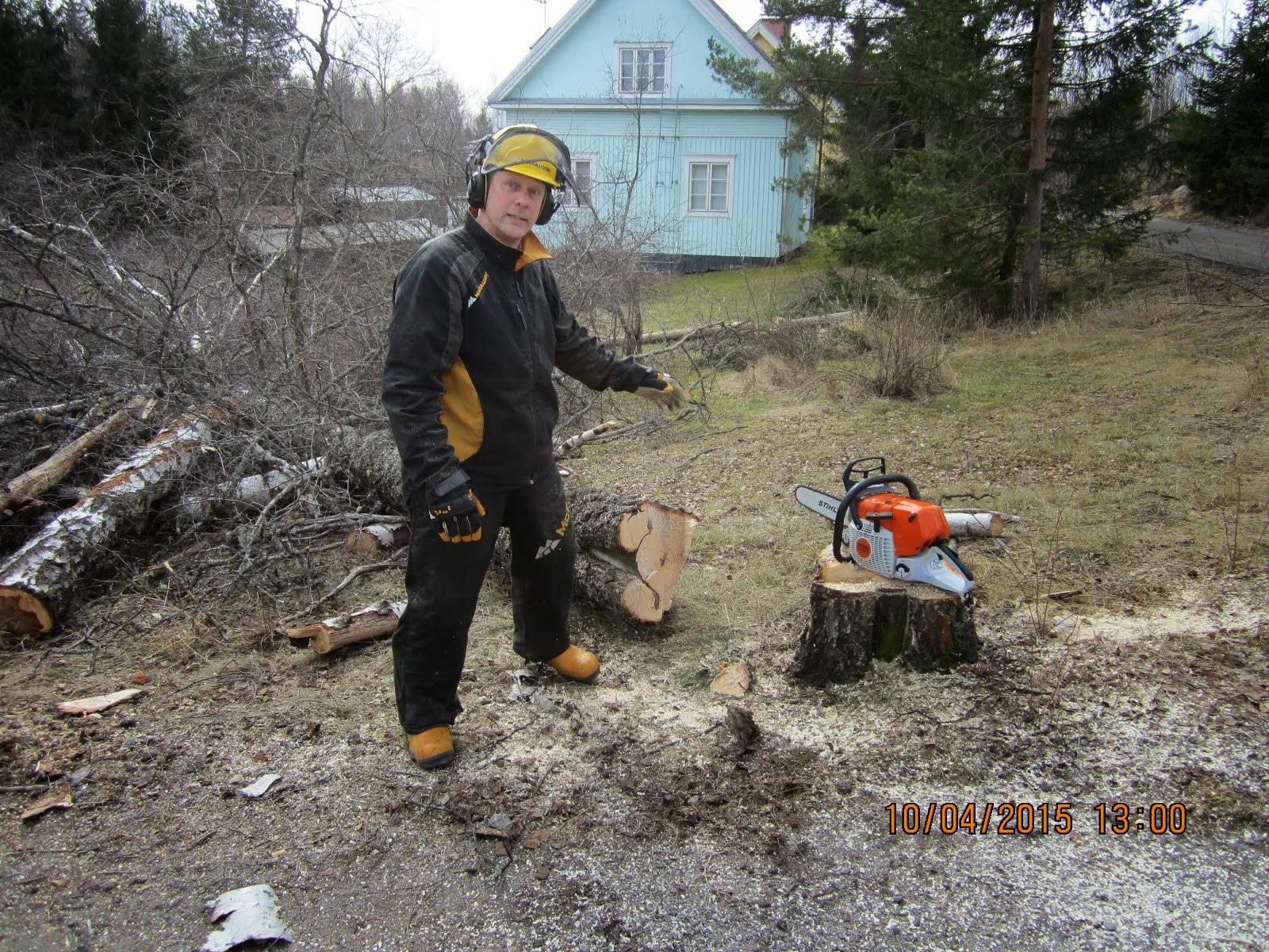 Pihakoivujen ja puiden kaadot Tampere Pirkanmaa alueella käteisellä. Kotitalousvähennysmahdollisuus