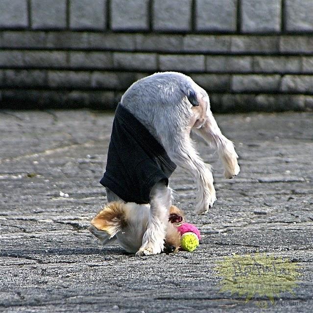 funny dog 7
