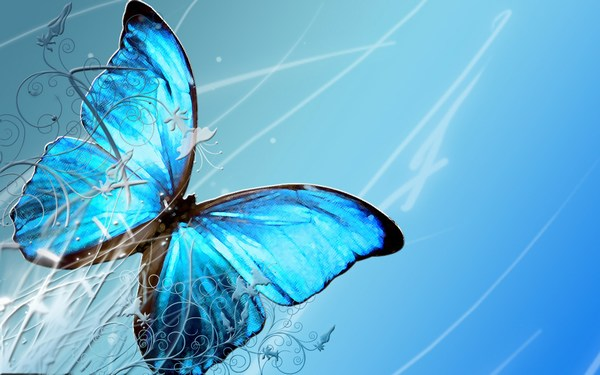 WIdescreen Butterfly Images Full HD