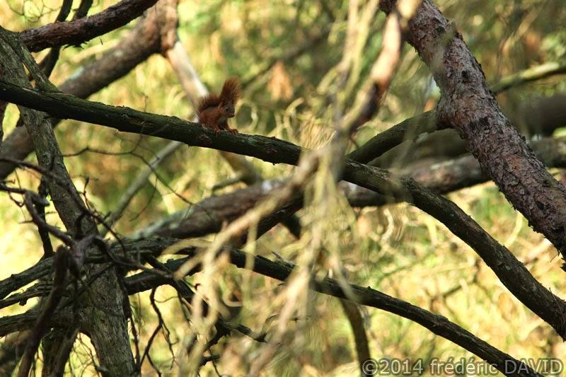 écureuil animaux forêt Fontainebleau Barbizon Seine-et-Marne