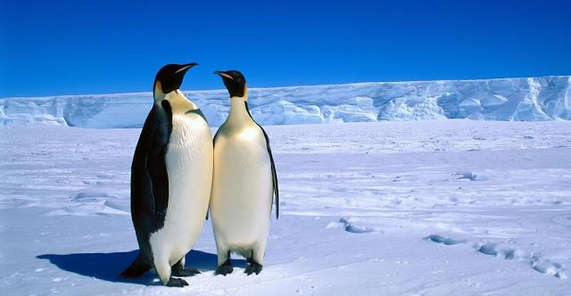 Circulo polar antartico y pinguinos emperador