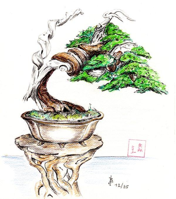 ein paar neue zeichnungen von bekannten b umen bonsai shohin zeichnungen und fotos von udo. Black Bedroom Furniture Sets. Home Design Ideas