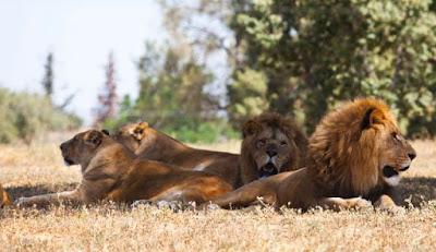 Bhubaneswar Zoo