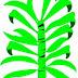 Δώστε λάμψη στα φύλλα των φυτών σας