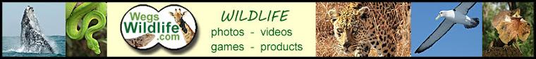 Wegs Wildlife