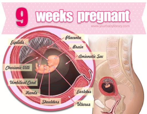 gravid i uge 9