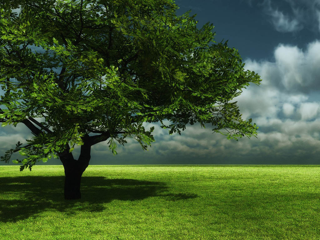 Beautiful Nature (Album 2) | FunJunktion