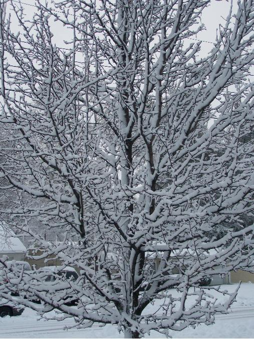 first warn weather team  snow pictures from today
