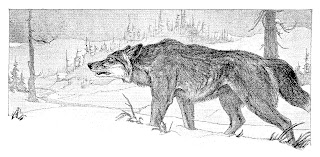 wolf hunting winter snow illustration