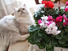 Sissi con i suoi fiori preferiti