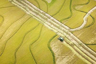 Produtores de arroz de Arkansas exportam toda sua safra para a Venezuela