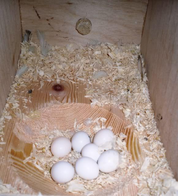 Инкубатор для яиц своими руками для попугаев 96