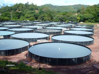 Ikhthys piscicultura ecol gica piscicultura fabrica for Elaboracion de estanques para piscicultura