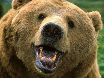 a bear's face