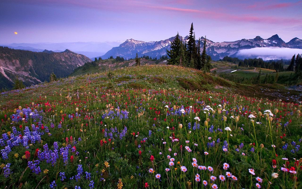 imagini cu flori de primavara - Poze cu flori hd plante