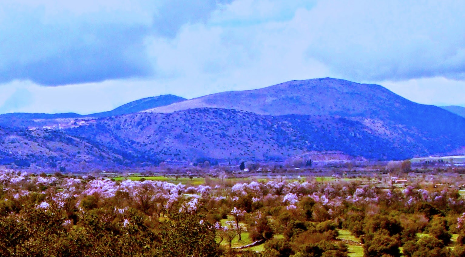 On the road to Sparta Almond trees in blossom.