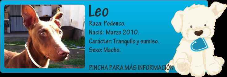 http://mirada-animal-toledo.blogspot.com.es/2012/03/leo-precioso-podenco-en-adopcion.html