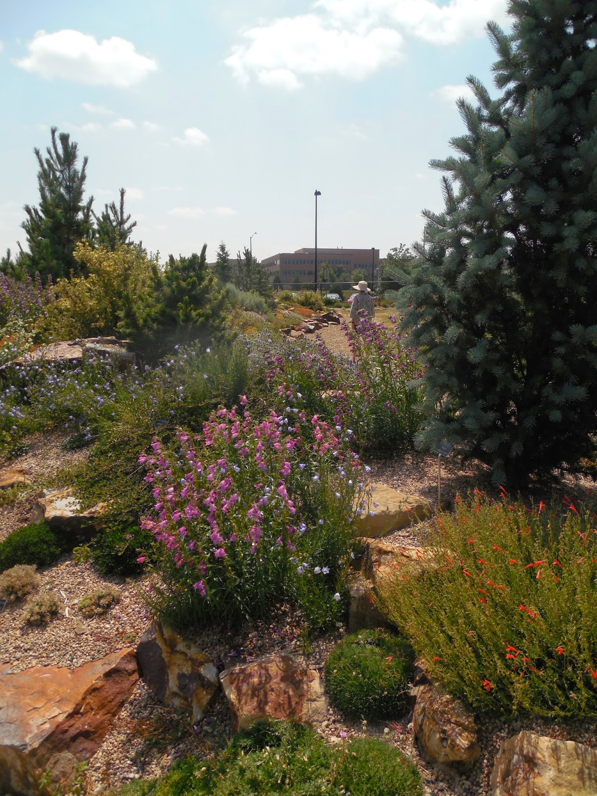 Prairiebreak: A best in class rock garden comes of age at the ...