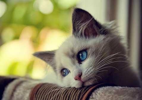 Foto Kucing Lucu Imut dan Menggemaskan 11