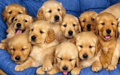 Fotos: Perros